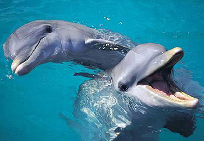 dolphins by seymour simon